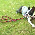 夏の犬の散歩、暑さ対策はどうする?熱中症を防ぐおすすめグッズ。