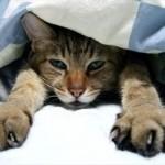 夏でも布団は必要?夏を涼しく快適に過ごせる寝具選びのポイント