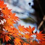 紅葉狩りの本当の意味って?行くのに最適な時期を知って楽しく紅葉狩りに行こう!