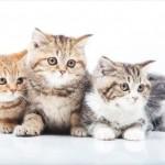 猫好き必見 都内で開催される猫の日イベントご紹介!