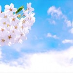 花見の由来って知ってる?歴史上有名な花見もご紹介!