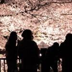花見をもっとロマンチックに 夜桜ライトアップが綺麗すぎる名所
